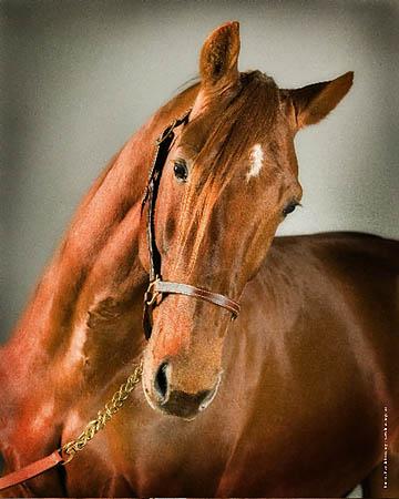 Statistiques trot france 2012 - Image tete de cheval ...